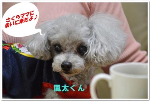 風太くん (1)