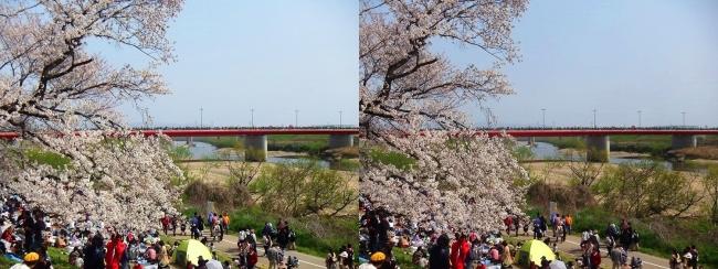 背割堤からの木津川・御幸橋(交差法)