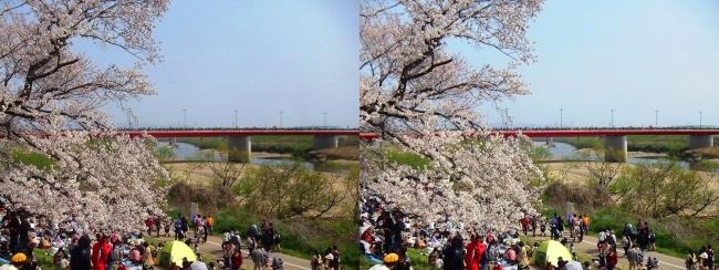 背割堤からの木津川・御幸橋(平行法)
