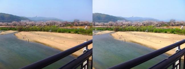 御幸橋からの木津川・背割堤(平行法)