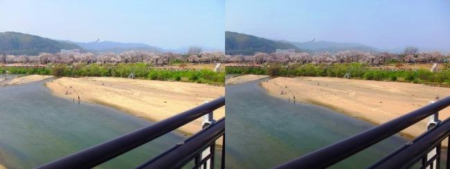 御幸橋からの木津川・背割堤(交差法)