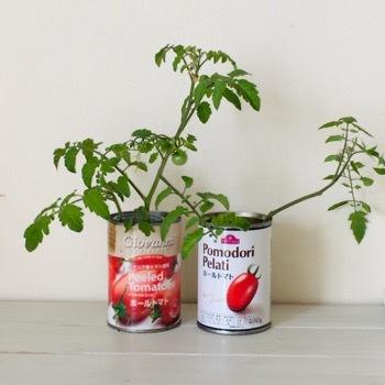 tomato190616-1