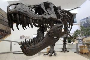 恐竜絶滅の日.jpg