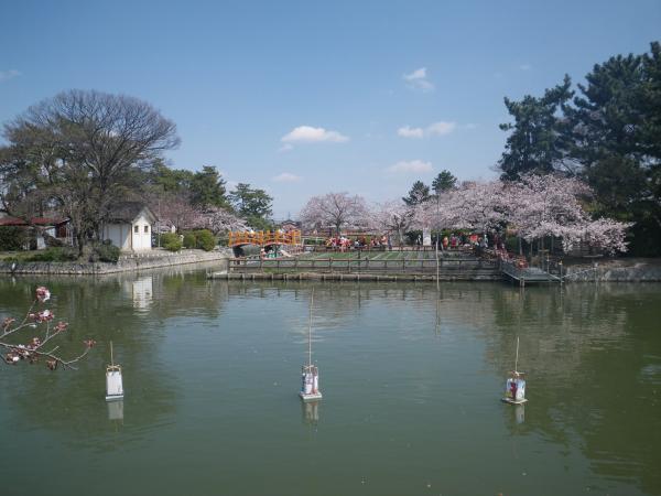 九華公園の桜2