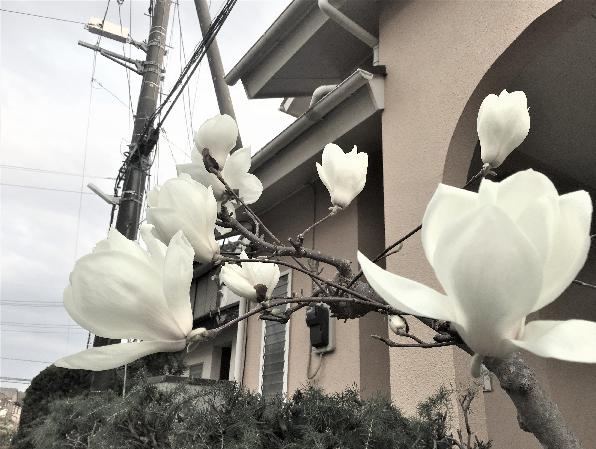 春ウォーキング23 (3)