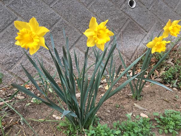 春ウォーキング 17