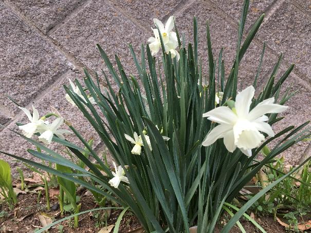 春ウォーキング 18