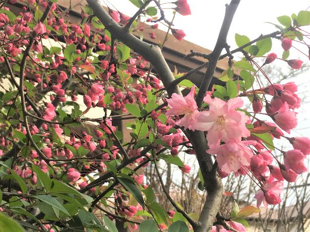 春ウォーキング 20 (2)