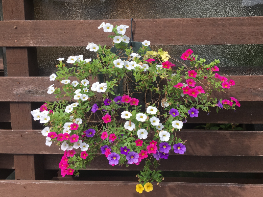 201906060430219f0.png