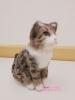 20190506 羊毛フェルトの猫1