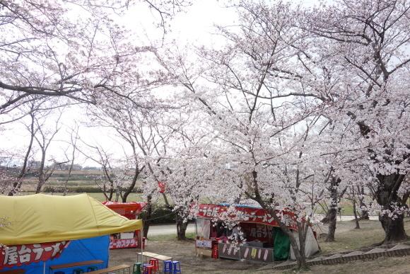 宮川の桜2019-08