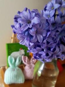 Hyacinth0419