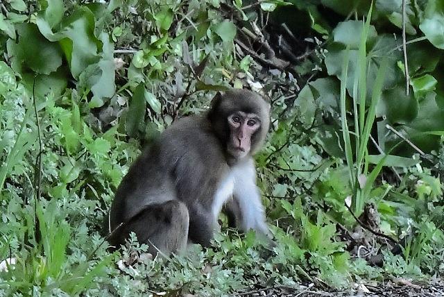 道路の端っこに猿がいた~