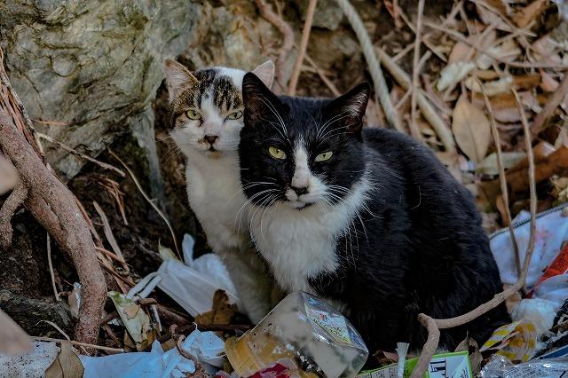 仲良く寄り添う長崎猫