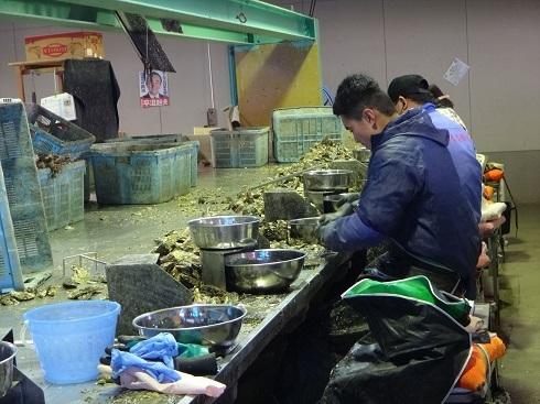 ss牡蠣剥き作業場