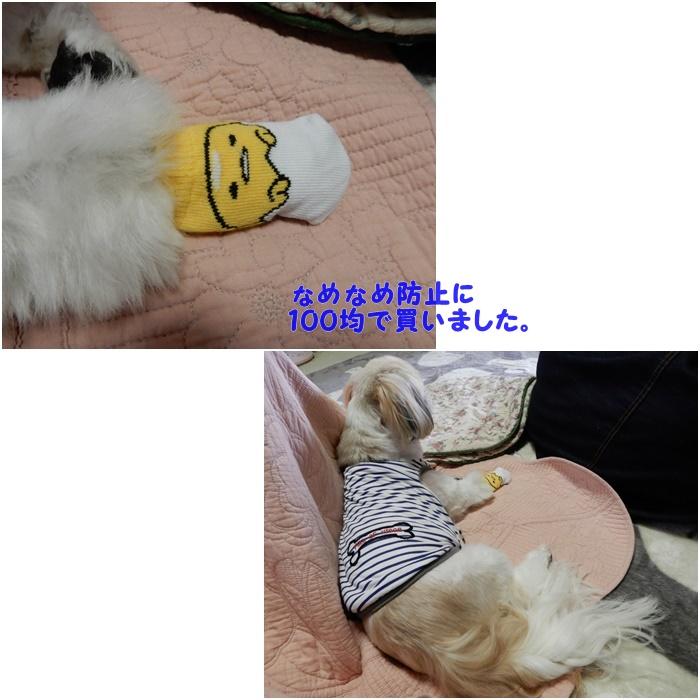 まる010516E
