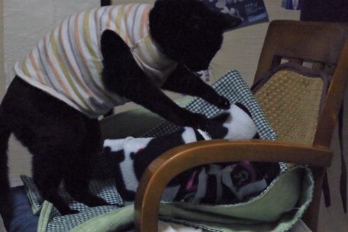 きなみちゃん 猫服 猫の洋服 ハンドメイド