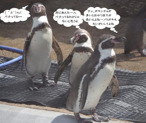 九十九島動植物園 森きらら ペンギン館
