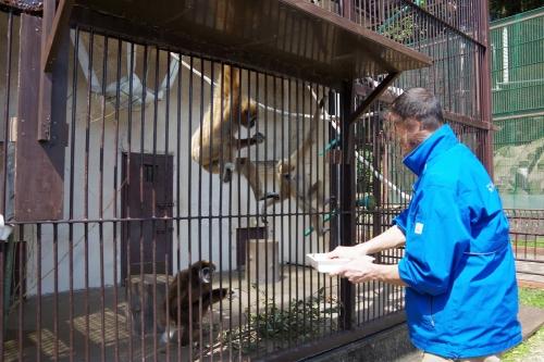 九十九島動植物園 森きらら シロテテナガザル