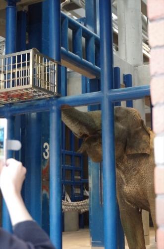 象の獣舎 内部 はなこさん 福岡市動物園