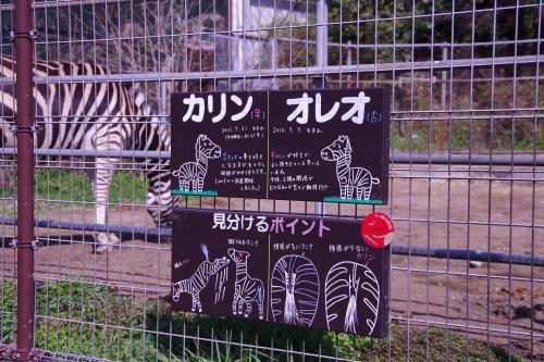 九十九島動植物園 森きらら シマウマ