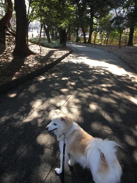 19,03春近い公園