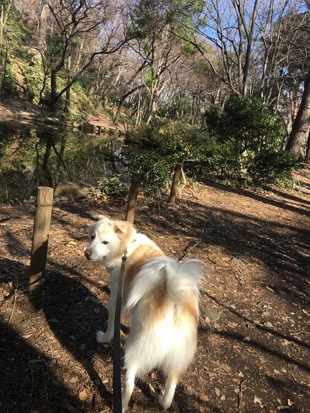 19,03春近い公園2
