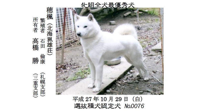 20190317岐阜01-北海道犬最優秀犬牝