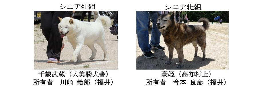 20190519-06福井道犬シニア全