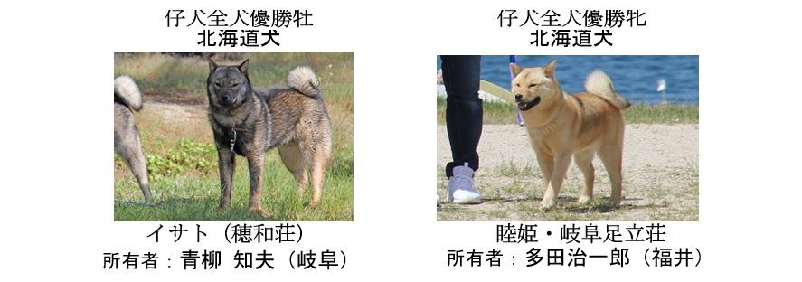 20190519-07福井道犬仔犬全