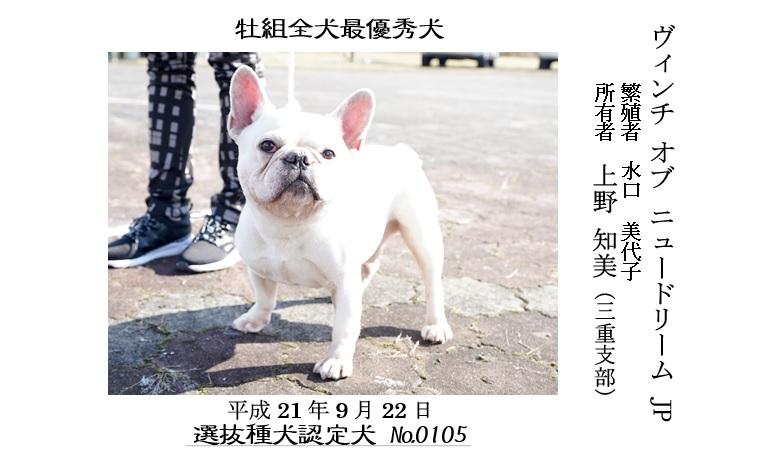 20190519-09福井全犬種最優秀犬牡