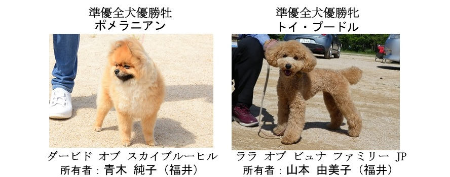 20190519-11福井全犬種準優全