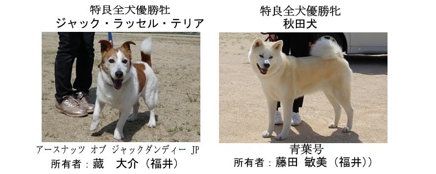 20190519-12福井全犬種特良全