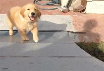 犬 gif
