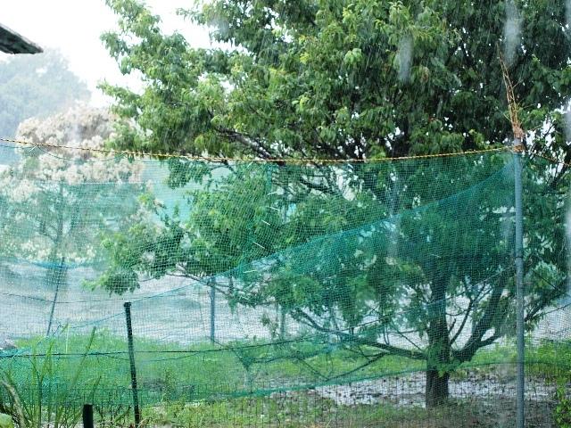 雨の日のニワトリノニワ