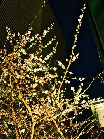 福徳神社(芽吹稲荷)【東京 日本橋】