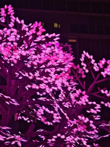 The Tree of Light -灯桜-【日本橋 桜フェスティバル2019】
