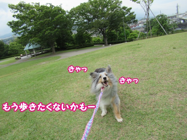 s_IMG_4177.jpg