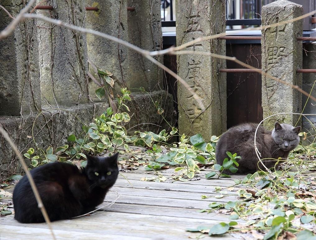 ブログ ノラ猫さんも寒いだろうなぁ、春が待ち遠しいねぇ!.jpg
