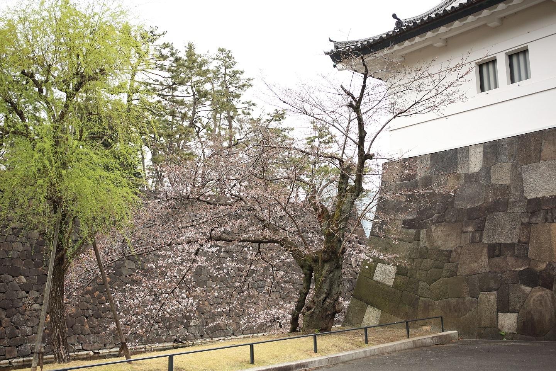 ブログ 桜田門に桜が.jpg