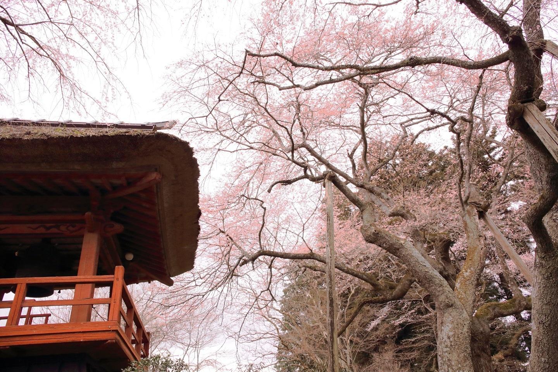 ブログ 桜、まだ厳しいなぁ.jpg