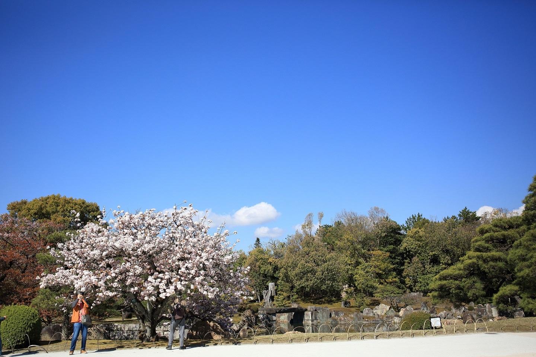 ブログ 二の丸庭園 3.jpg