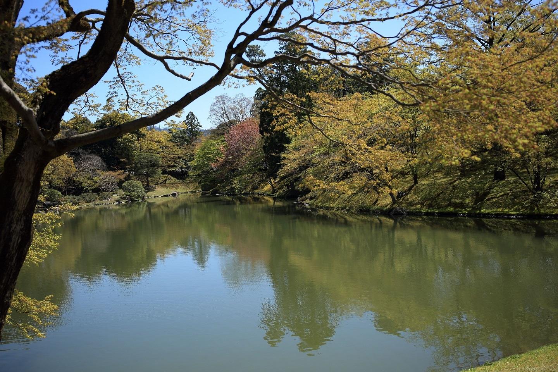 ブログ 萌黄色に縁取られた北池.jpg