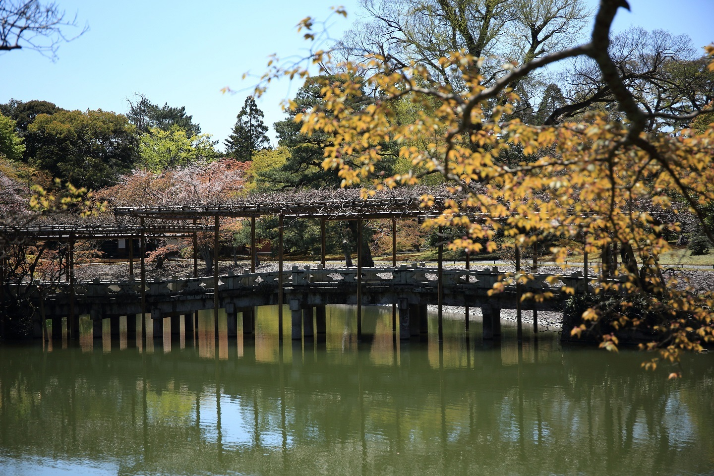 ブログ 藤の橋.jpg