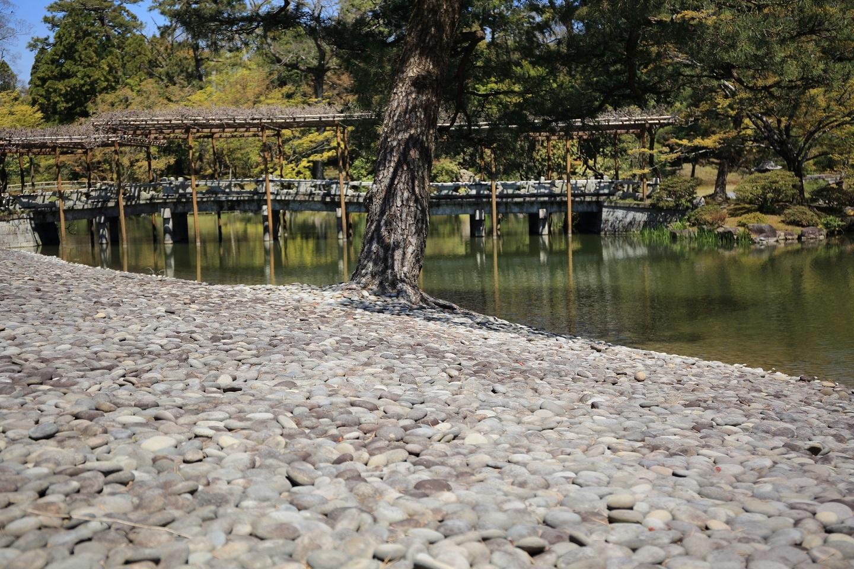 ブログ 南池の砂洲から見た藤橋.jpg