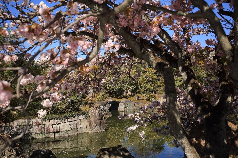 ブログ 二の丸庭園 2.jpg