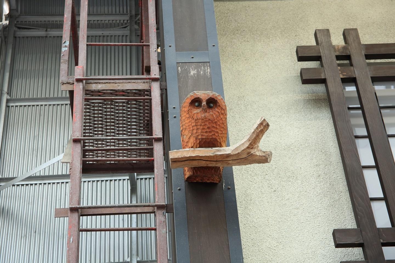 ブログ アーケード街に野鳥発見.jpg