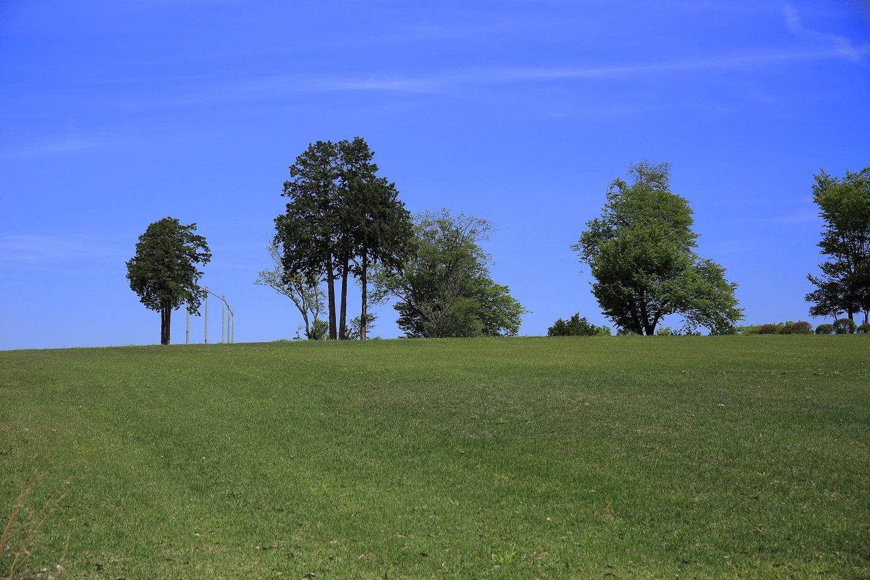ブログ 丘陵の牧草畑.jpg