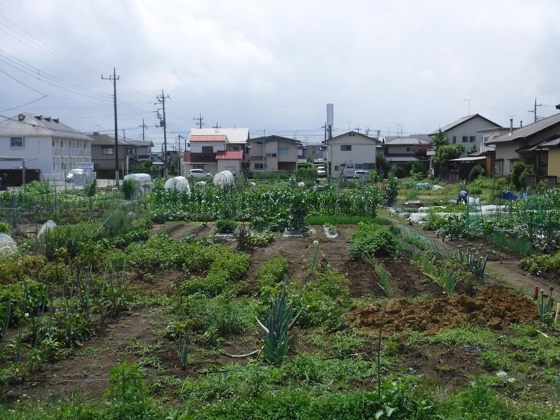 ブログ 市民菜園.jpg