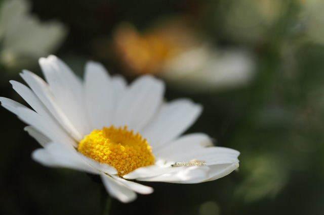 白い小花190422